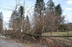 Деревья поврежденные гололедью 5 Стоковые Изображения RF