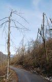 Деревья поврежденные гололедью Стоковая Фотография RF