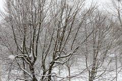 Деревья пока суматоха снега зима белизны снежинок предпосылки голубая Стоковое Изображение