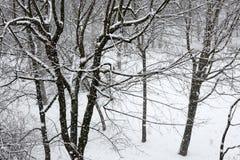Деревья пока суматоха снега зима белизны снежинок предпосылки голубая Стоковая Фотография RF
