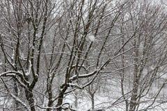 Деревья пока суматоха снега зима белизны снежинок предпосылки голубая Стоковые Фотографии RF