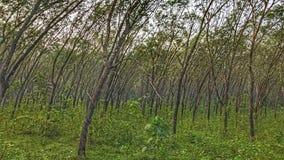 Деревья поколоченные ветром Стоковые Фото