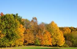Деревья покрашенные осенью с космосом экземпляра Стоковая Фотография RF