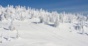 Деревья покрытые снегом в ландшафте зимы Стоковое Изображение RF