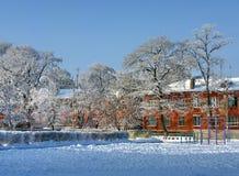 Деревья покрытые с изморозью в дворе Стоковое Изображение