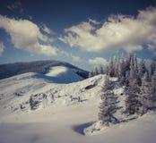 Деревья покрытые с изморозью и снегом в горах стоковое фото rf