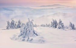 Деревья покрытые с изморозью и снежком в горах стоковое изображение