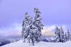 Деревья покрытые с снегом на заходе солнца стоковая фотография rf
