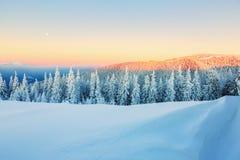 Деревья покрытые с снежинками Стоковая Фотография