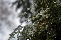Деревья покрытые с льдом Стоковое фото RF