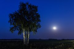 Деревья полнолуния и березы Стоковые Фото