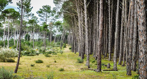 Деревья последовательные стоковое изображение rf