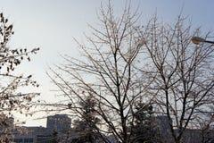 Деревья после последнего шторма льда Стоковые Изображения RF