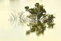 Деревья потопленные в воде озера Стоковые Изображения RF