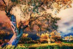 Деревья под звездами Стоковое Изображение