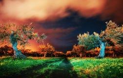 Деревья под звездами Стоковые Фотографии RF