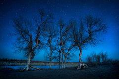Деревья под ночным небом в пустыне стоковое фото rf