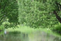 Деревья положенные над водой Стоковые Изображения