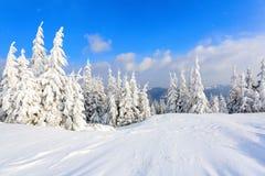 Деревья под снегом на лужайке Стоковые Изображения RF