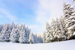 Деревья под снегом на лужайке Стоковые Фото