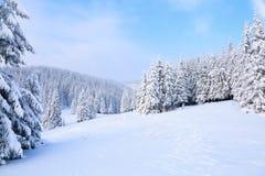 Деревья под снегом на лужайке Стоковая Фотография