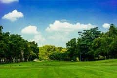 Деревья поля и голубое небо Стоковое Изображение