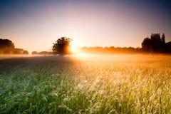 Деревья поля и грецкого ореха Стоковые Фотографии RF