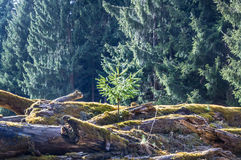 Деревья прессформы Стоковые Изображения RF
