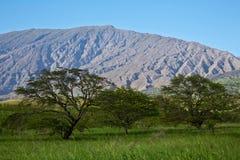 Деревья приближают к Haleakala стоковые фотографии rf