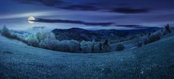 Деревья приближают к лугу в горах на ноче Стоковая Фотография RF