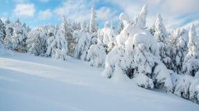 Деревья привидения, Йеллоустон Стоковые Фотографии RF