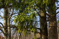 деревья природа и ветви в зимнем месяце январе стоковые изображения rf