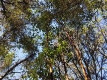 Деревья против солнечного света стоковое изображение rf