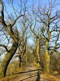 Деревья пути Стоковая Фотография RF