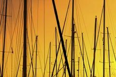 Деревья плавания в порте Стоковое Изображение RF