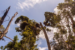 Деревья пляжа Ubatuba стоковая фотография