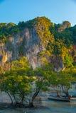 Деревья растут в море krabi Таиланд Стоковое Изображение RF
