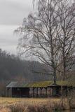 Деревья растут через крышу стоковое фото