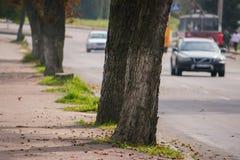деревья растя бортовая - мимо - сторона дороги Стоковое Фото