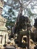 Деревья растя из руин на TaProhm Стоковое Изображение