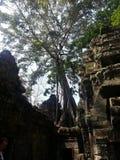 Деревья растя на животиках Prohm Стоковое Изображение RF