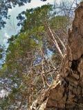 Деревья растя на уступе утеса над новым следом велосипеда реки Стоковые Изображения RF