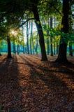 Деревья ринва Солнця стоковые изображения rf