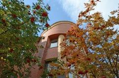 Деревья рябины на предпосылке кирпичного здания и голубого неба Стоковые Изображения RF