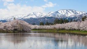 Деревья Сакуры вишневого цвета и гора Myoko Стоковые Изображения