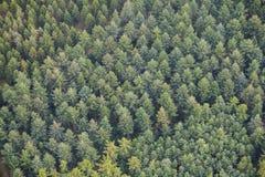Деревья сверху Стоковое Изображение RF