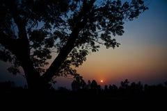 Деревья силуэта с темным фото предпосылки неба стоковая фотография rf