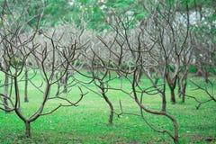 Деревья смерти в саде Стоковое фото RF