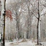 Деревья снега Стоковая Фотография