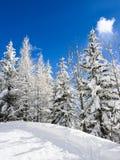 Деревья снега Стоковое фото RF